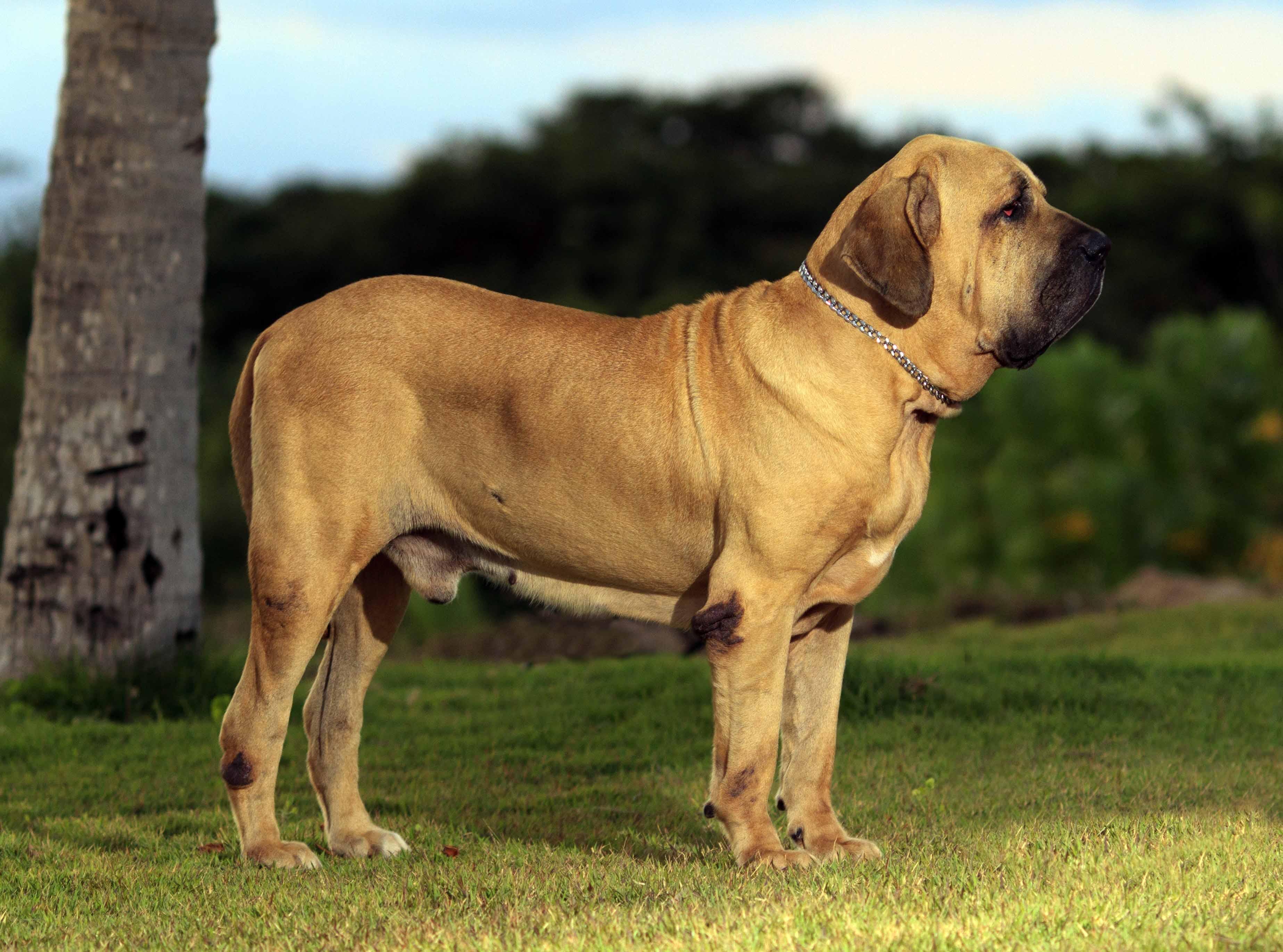rare dogs