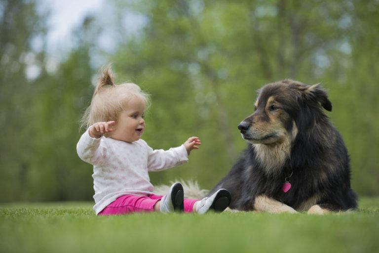 câinele-dumneavoastră-şi-noul-bebeluş