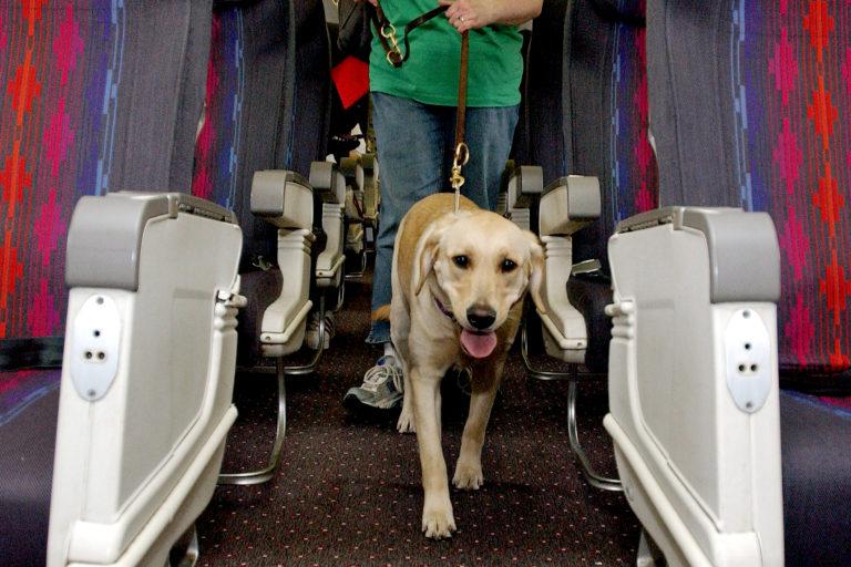 călătoria-câinilor-cu-avionul