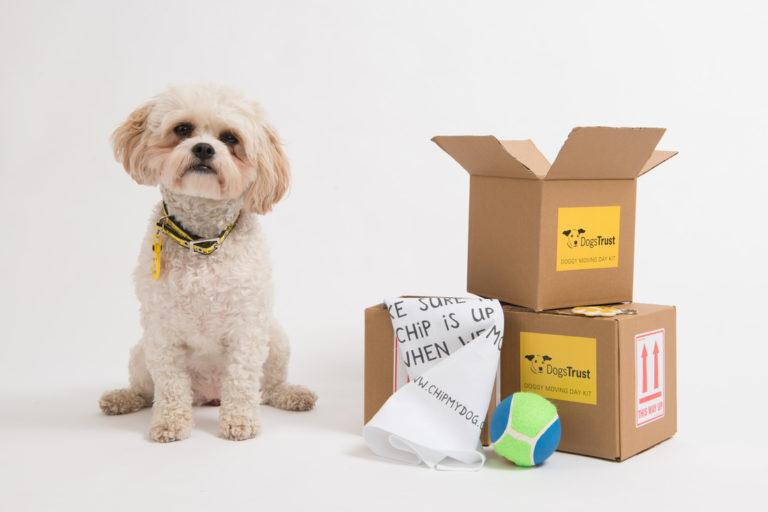 mutarea-unui-câine
